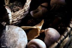 Pot pourrit (miniquesk) Tags: déco potpourrit naturemorte
