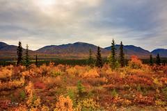 Autumn in Alaska (Dan King Alaskan Photography) Tags: autumn fall tundra colors orange red yellow mountains scenic canon50d
