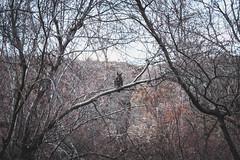 Hooter (johnwporter) Tags: hiking scramble mountains easternwashington washington desert centralwashington sunlakesdryfallsstatepark statepark monumentcoulee coulee umatillarock 徒步 爬行 山 華盛頓東部 華盛頓州 荒漠 華盛頓中部 太陽湖乾瀑布州立公園 州立公園 豐碑深谷 深谷 尤馬蒂拉岩