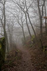 Forest Path (Nereus[GER]) Tags: forest path woodland landscape canon eos 80d 2470mm f4 is usm lens saarland mettlach nereusger smerlot