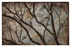 Forest (holly hop) Tags: tree fire farm burnt burn bushfire australia centralvictoria victoria emu black dry summer hot