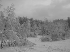 monochromic mood (VERUSHKA4) Tags: bw monochromic season winter hiver nature february pond park kuskovo neve neige snow branch bough canon europe russia moscow ville city cityscape beautiful cloud cloudy snowy snowfall
