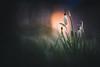 So shy (--StadtKind--) Tags: stadtkind sonyfe90mmf28macrogoss sonyilce7r alphaddicted sonyalpha blüte blume flores fleur flower spring bokehlicious doflicious dof bokehmasters bokehaddicts bokeh