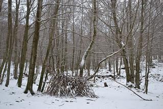 La fageda amb neu
