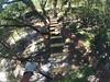 G0121264 (harleyhurricane1) Tags: line zip zipline ziplinepark dadecityflorida treehoppers centralflorida largestziplineparkincentralfl dadecity