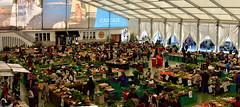 Mercado de Cascais, 2018 (pedrik) Tags: cascais portugal market mercado d7200 nikkorafsdx35mmf18g fotoxx gimp retinex