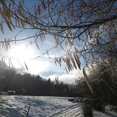 Near my home (nathaliedunaigre) Tags: paysage landscape snow walk promenade path chemin trees viesimple simplelife nature carré square