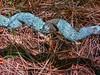 Twisted vine I (elphweb) Tags: hdr highdynamicrange nsw australia vome vines twisty twisted spiral