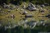 acquariflesso (edansilo) Tags: acqua riflesso rocce montagna algo lago carezza altoadige