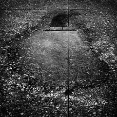 Untitled (鴉片丹) Tags: opdanphotonote鴉片丹攝影 fujigf670 berggerpancro400 hc110b