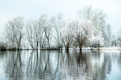 (Femme Peintre) Tags: mönchbruch see bäume spiegelung schnee winter natur outdoor landschaft