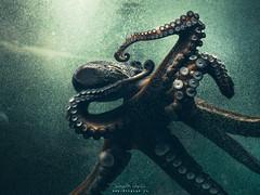Octopus To The Party (diegogm.es) Tags: olympus penf pen aquarium finisterrae acuario coruña 17mm galicia españa spain