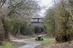 Offchurch Greenway 4th February 2018 (boddle (Steve Hart)) Tags: stevestevenhartcoventryunitedkingdomcanon5d4 offchurch greenway 4th february 2018 steve hart boddle steven bruce wyke road wyken coventry united kingdon england great britain canon 5d mk4 6d 100400mm is usm ii 2470mm standard wild wilds wildlife life nature natural bird birds flowers flower fungii fungus insect insects spiders butterfly moth butterflies moths creepy crawley winter spring summer autumn seasons sunset weather sun sky cloud clouds panoramic landscape unitedkingdom gb