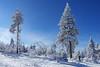 Am Fichtelberg (Travelpics...) Tags: winter snow fichtelberg deutschland germany schnee landscape landschaft baum himmel ast tanne blau blue weis white sachsen wald forest