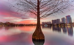Lonely Cypress (tshabazzphotography) Tags: cypress cypresstree nature tree sunrise colorful color cloudlovers cloudheaven reflecting reflection beautiful mornings lonely longshutterspeed longexposurejunkies longexposurephotography canonoffical canon lakeeola downtown downtownorlando urbanorlando urban citybeautiful cityscape landscapephotography landscape orlando florida winter hdr hdrphotography blending layers ngc