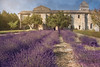 Saint Paul de Mausole (terrencechuapengqui) Tags: provence france travel photography lavender fine art
