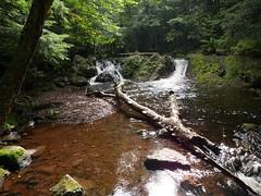 WHO NEEDS NIAGRA FALLS? (Rob Patzke) Tags: lumix lx100 stream nature sunlight shadow rock