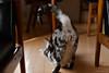 _NCL2787 (chitoroid) Tags: nikond750 nikkor50mmf18g japan hokkaido sapporo cat