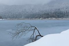Cerknica Lake (happy.apple) Tags: cerkniškojezero cerknicalake slovenia slovenija intermittentlake presihajočejezero winter snow zima sneg snowstorm zadnjikraj geotagged
