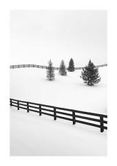 Quartet (Sandra Herber) Tags: ontario toronto winter