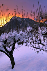 The beauty of snow (Robyn Hooz) Tags: snow trees sunset alberi neve layer cielo sky tronchi cadore veneto cime peaks wonder