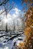 Ice Storm [02.08.18] (Andrew H Wagner | AHWagner Photo) Tags: 5dmk3 5d3 5dmkiii 5dmarkiii 5dmark3 canon eos 1635l 1635mm f4 f4l is usm ultrawideangle wideangle nature trees tree outdoors explore exploration exploring hiking snow winter ice frozen leaves orange cunninghamfalls cunninghamfallsstatepark thurmont maryland md mountain landscape