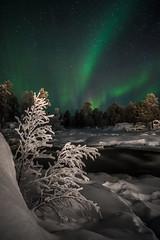 Arctic Skeletons (AntiAtlas) Tags: night nightscape nightphotography stars aurora auroraborealis northernlights arctic arcticcircle finland janiskoski inari snow winter wintertime