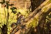 Squirrel at Leighton Moss (kenemm99) Tags: 5dmk3 leightonmoss canon winter lancashire kenmcgrath squirrel