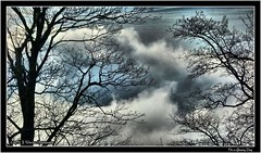 On a Gloomy Day 01 (M.J.Woerner) Tags: clouds trees winter november december gloominess murkiness storm weather lonesomeness desolateness desolation desperation distress hopelessness hope confidence outdoor fog haze mist nature