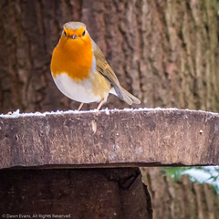 Twig legs!! (Photo_stream_this) Tags: rufford park robin nottinghamshire snow