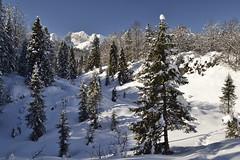 A place for my head (matteo.buriola) Tags: friuli prealpi bellunesi sentiero cai970 montelonga winter landscape snow trekking wood trees nature mountains nikon d3100