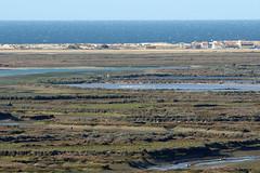 Distant Flamingos (Roy Lowry) Tags: faro riaformosa montenegro praiadefaro greaterflamingo phoenicopterusroseus