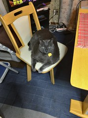 Happy to be Inside (sjrankin) Tags: japan hokkaido yubari tv chair kitchen yuba cat animal edited 21february2018
