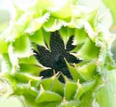 A Flower's Black Heart (Stanley Zimny (Thank You for 28 Million views)) Tags: flower botanical garden green skylands nj black