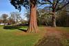 Trunk and Shadow (James Mans) Tags: nikon d5500 eastcote uk england green trees park sunshine sun winter blue sky haydon hall cricket club grass tree