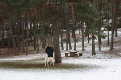 IMG_7673.jpg (Alberto Lacasa) Tags: lena jaca chenia mountains outdoor snow pirineos trees 50mm arboles pet pyrenees parador dog oroel aragon nevada trekking nieve mountain