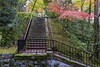 (Paranoid Phantom) Tags: japan travel kyoto autumn sony a6000 foilage trees colour colours stairs gree red leaves