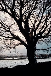 Dark Tree with Snow
