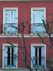 Tree and facade - Cadiz