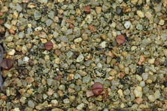 19 janvier 2018 - Gibbaeum heathii, 30 jours