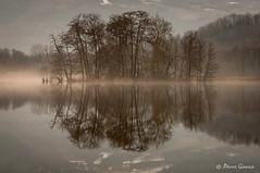 L'ile de Ste Hélène ☺ (Pierrotg2g) Tags: nature paysage landscape lac lake eau water reflets reflection arbres trees nikon d90 tamron 70200
