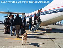 Dog Flying Delta Air Lines (Performance Impressions LLC) Tags: dog fly flying delta air lines airlines deltaairlines service animal serviceanimal guidedog guideanimal assistancedog hearingguidedog travel plane airplane sky traveldog travelingdog pooch mut k9 crating handicapped handicap supportanimal emotional support emotionalsupportdog deltaconnection jetset unitedairlines adventuredog tarmac