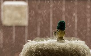 the snow watcher