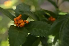 180124008 (murbozero) Tags: murbo japan flower