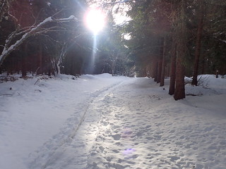 En forêt au petit matin