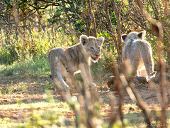 _4292251.jpg (Brian 330 in South Africa) Tags: