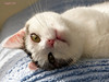 Cute Jasmijn (Cajaflez) Tags: kat katze chat gatto portrait portret pink ears whiskers snorharen jasmijn coth5