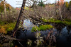 don't get bogged down (Port View) Tags: fujixe2 novascotia ellershouse canada cans2s 2017 fall autumn bog water trees reflection color colour morning