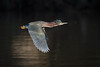 Light Saber (gseloff) Tags: greenheron bird flight bif nature wildlife animal water shadow contrast bayou horsepenbayou pasadena texas kayak gseloff