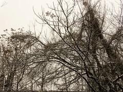 Intrecci. Naviglio Martesana. Milano (diegoavanzi) Tags: milano milan italia italy lombardia lombardy neve snow marzo march sony hx300 bridge naviglio martesana canal naviglilombardi